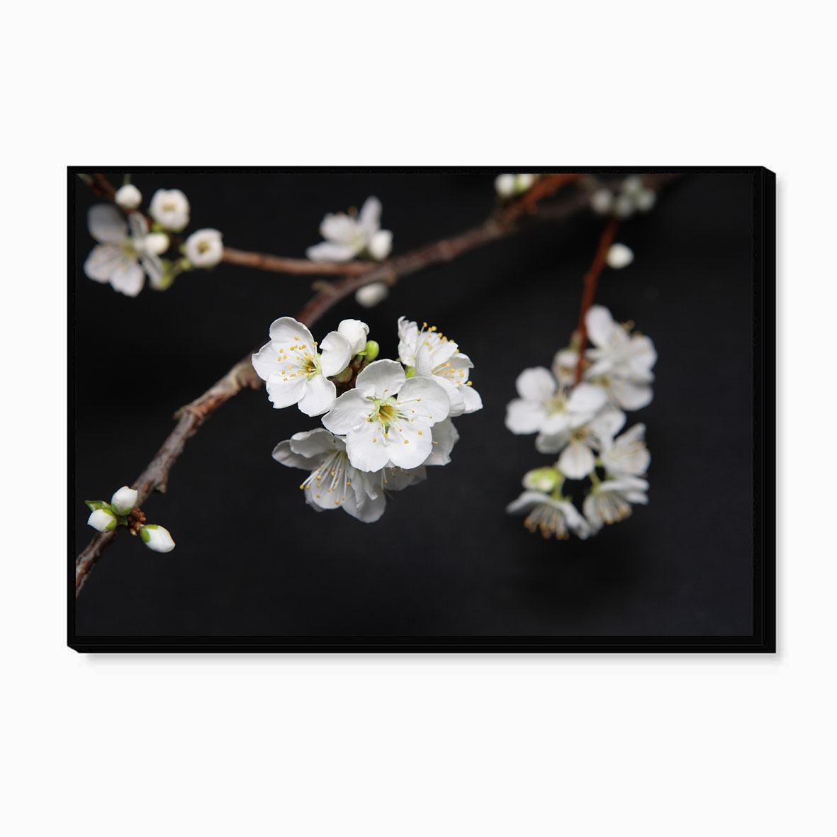 Tranh canvas N – Cherry Blossom