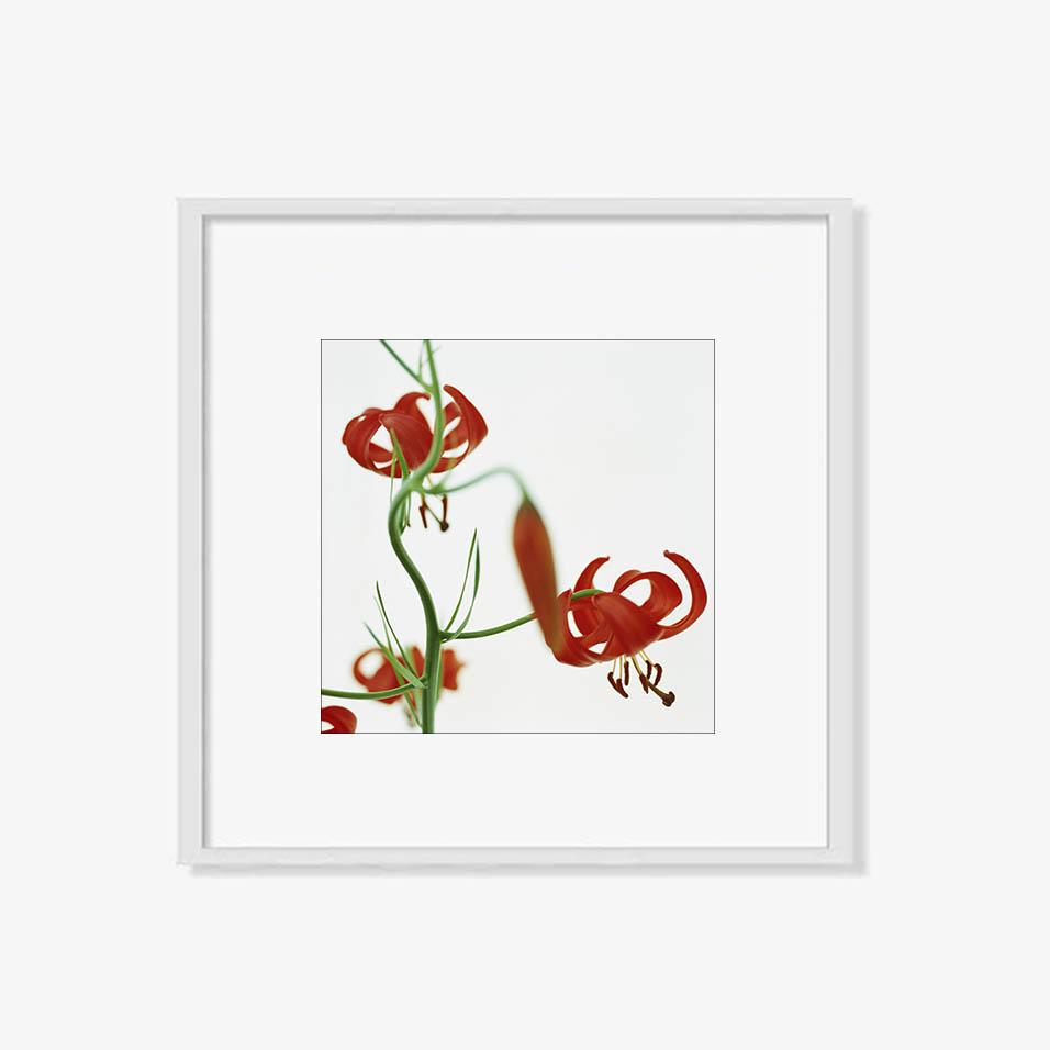 Tranh N – Spring blossom (C)